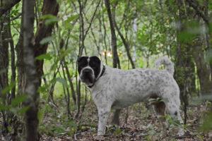 Fotografie Fotografin Hund Hundefoto Hundeshooting Shooting Celle Winsen Aller Hannover Heidekreis Bergen Shar Pei