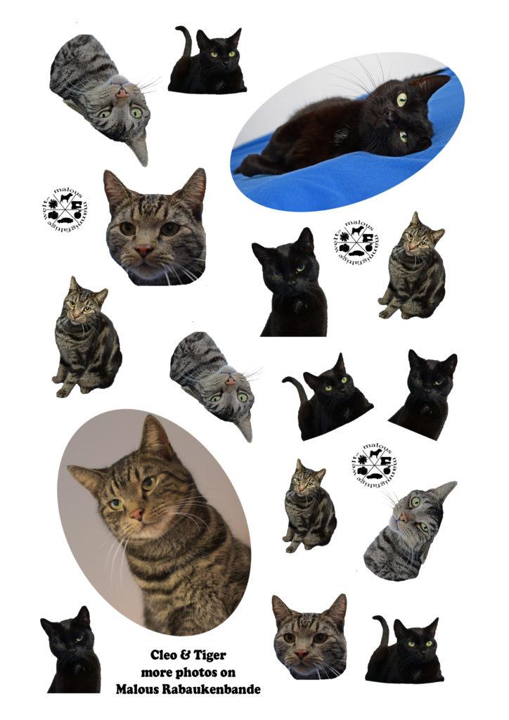 Sticker for free Kostenlos Downloaden Google Maloutainment kreativ Planer Organizer basteln kleben gestalten Aufkleber Katze Kater schwarz Tiger Malous Rabaukenbande cat cats Katzen getigert pets Haustiere Cleo