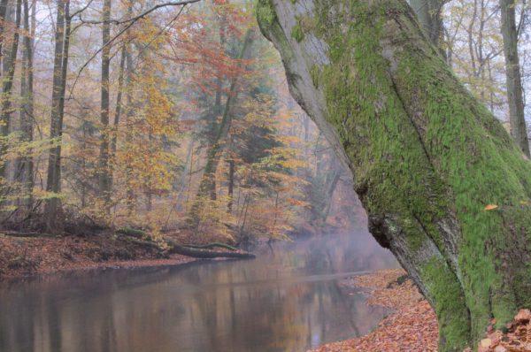 Baum-Fotografie-Blog-Bach-Fluss-Lachte-Celle-Wald-Fotografieblog-Kreativblog-kreativ-Winsen-Hannover-Langzeitbelichtung-lange-Belichtung