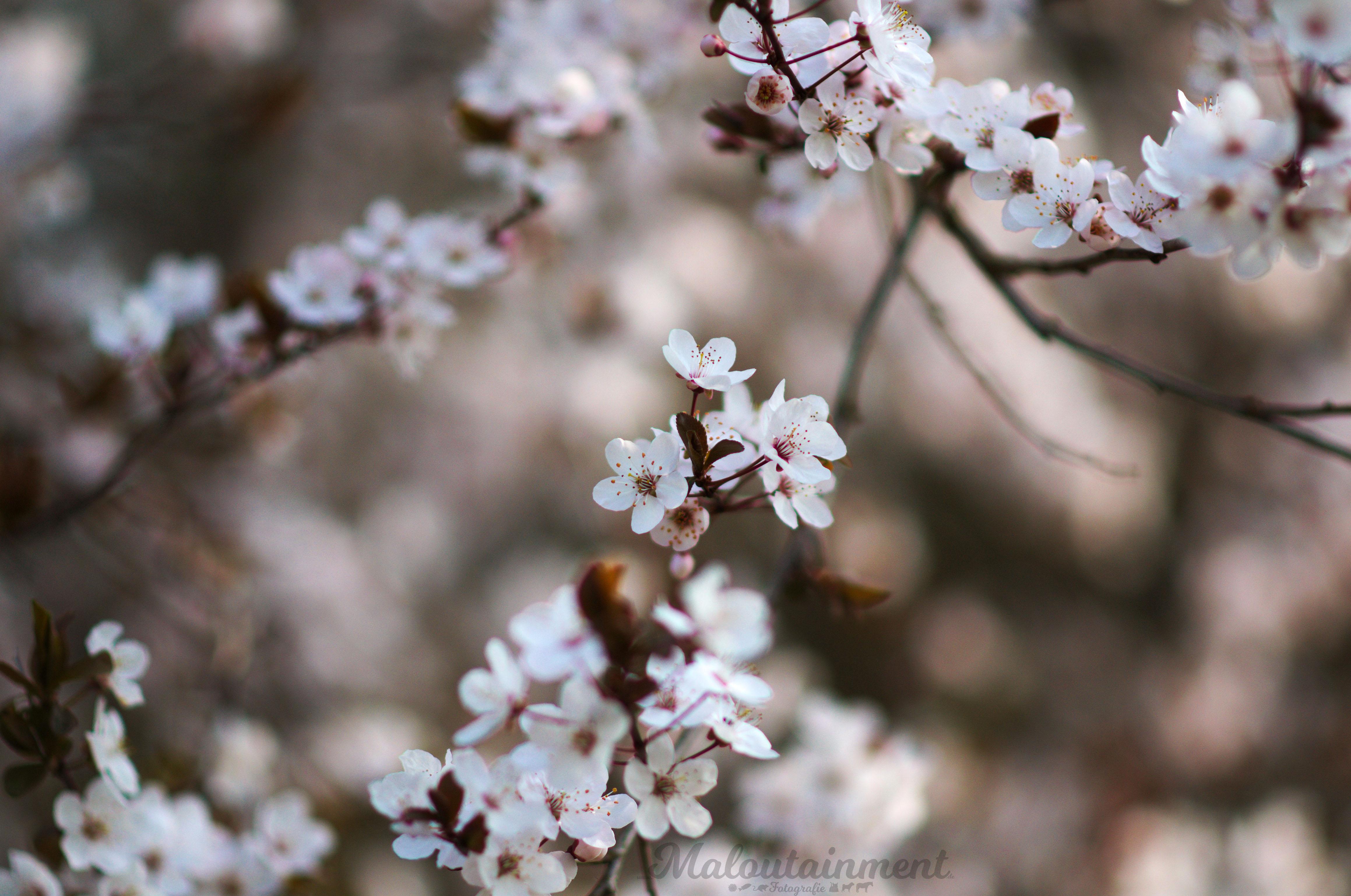 Blüten-welten-Welt-Unschärfe-neues-entdecken-Fotografie-Hannover-Hamburg-Hildesheim-Tierfotografie-Celle-Winsen-Maloutainment-Facebook-Instagram