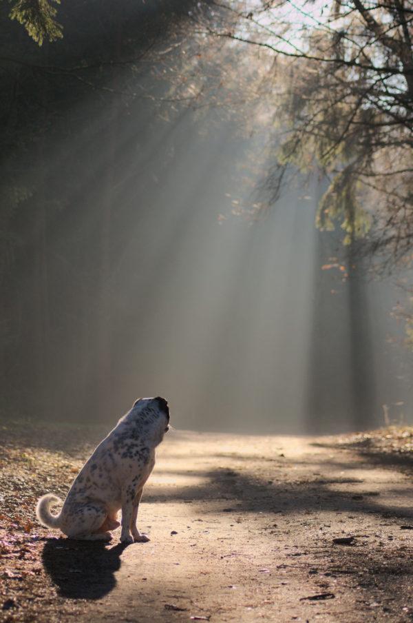 Fotografie-Zauberspruch-Hund-Katze-Pferd-Blog-Hundefoto-Katzenfoto-Pferdefoto-Auschnitt-Motiv-Umgebung-Thema-Haltung-Perpektive-Blick-Nachbearbeitung-Umsetzung-Einzigartig-Maloutainment