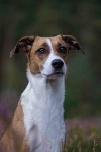 Maloutainment-Mischling-Hund-Fotografie-Huendin-Frau-Freundschaft-Fotografin-Hannover-Celle-Heide-Blumen-Niedersachen-Blog-Hundefotografie-Charakter-portaet