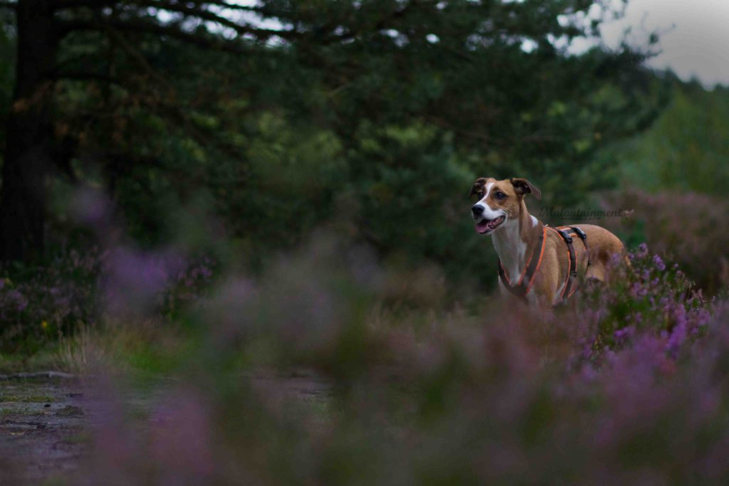 Maloutainment-Mischling-Hund-Fotografie-Huendin-Frau-Freundschaft-Fotografin-Hannover-Celle-Heide-Blumen-Niedersachen-Blog-Hundefotografie-Charakter-wlad