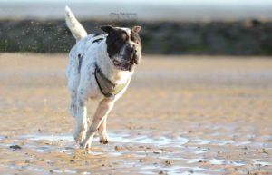maloutainment-hund-dog-shar-pei-strand-nordsee-meer-watt-cuxhaven-niedersachen-tipp-Fotografie-Fotografin-Urlaub-Besuch-Erinnerung-Gefühle-Weite-bewegung