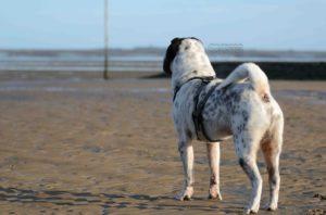 maloutainment-hund-dog-shar-pei-strand-nordsee-meer-watt-cuxhaven-niedersachen-tipp-Fotografie-Fotografin-Urlaub-Besuch-Erinnerung-Gefühle-Weite-weitblick