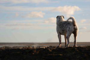 maloutainment-hund-dog-shar-pei-strand-nordsee-meer-watt-cuxhaven-niedersachen-tipp-Fotografie-Fotografin-Urlaub-Besuch-Erinnerung-Gefühle-Weite-wellenbrecher