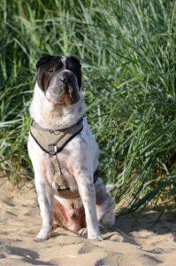 maloutainment-hund-dog-shar-pei-strand-nordsee-meer-watt-cuxhaven-niedersachen-tipp-Fotografie-Fotografin-Urlaub-Besuch-Erinnerung-Gefühle-Weite-Sandschnute