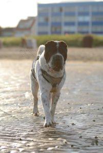 maloutainment-hund-dog-shar-pei-strand-nordsee-meer-watt-cuxhaven-niedersachen-tipp-Fotografie-Fotografin-Urlaub-Besuch-Erinnerung-Gefühle-Weite-cuxhaven