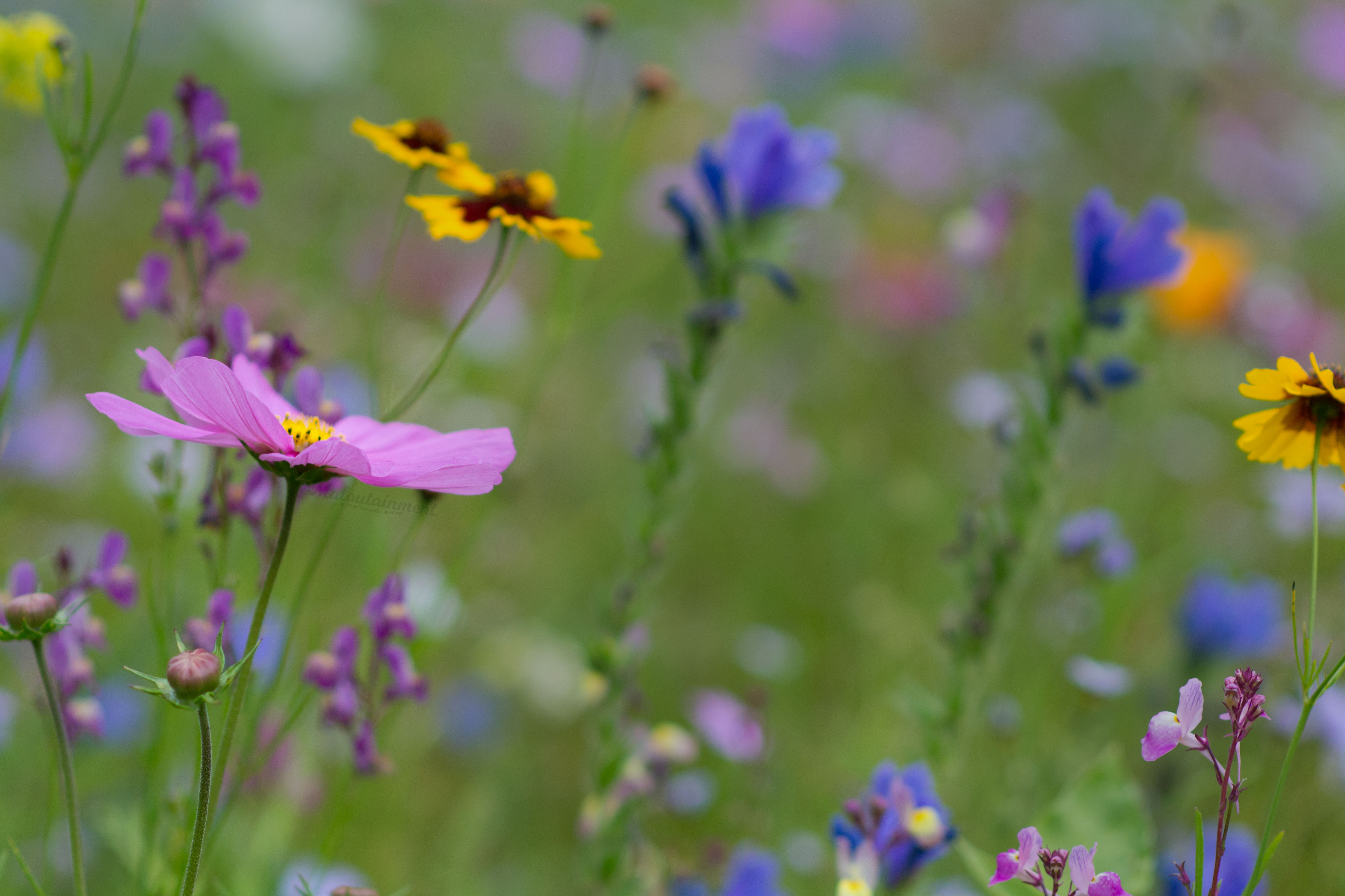 Blümchen in Wildblumenwiese Maloutainment Fotografie Handy Natur Tier Kamera Blog Tipps Tricks Social Media Snapchat Facebook Instagram Sommer Blumen