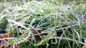 Maloutainment Fotografie Handy Natur Tier Kamera Blog Tipps Tricks Social Media Snapchat Facebook Instagram Frost Nahaufnahme Winter