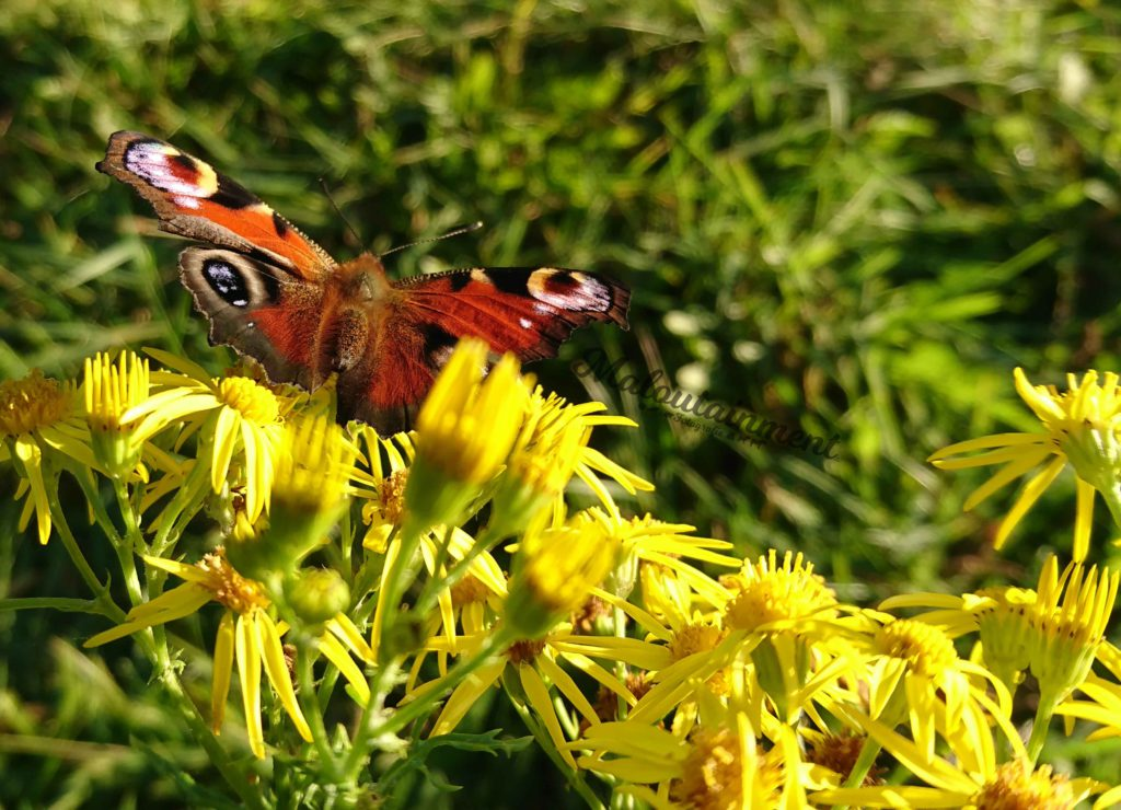 Maloutainment Fotografie Handy Natur Tier Kamera Blog Tipps Tricks Social Media Snapchat Facebook Instagram Sommer Blumen Schmetterling