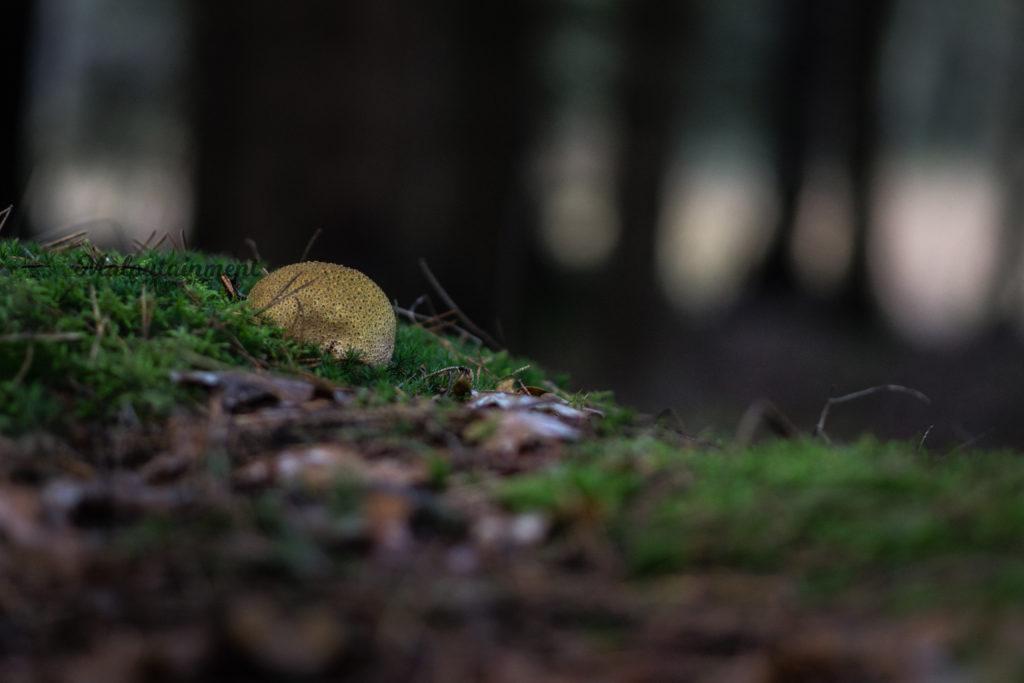 Pilz im Wald Maloutainment Fotografie DIY Kreativ Handy Natur Tier Kamera Blog Niedersachsen Hamburg Tipps Tricks Weiterbildung Hilfe Verbesserung Bokeh