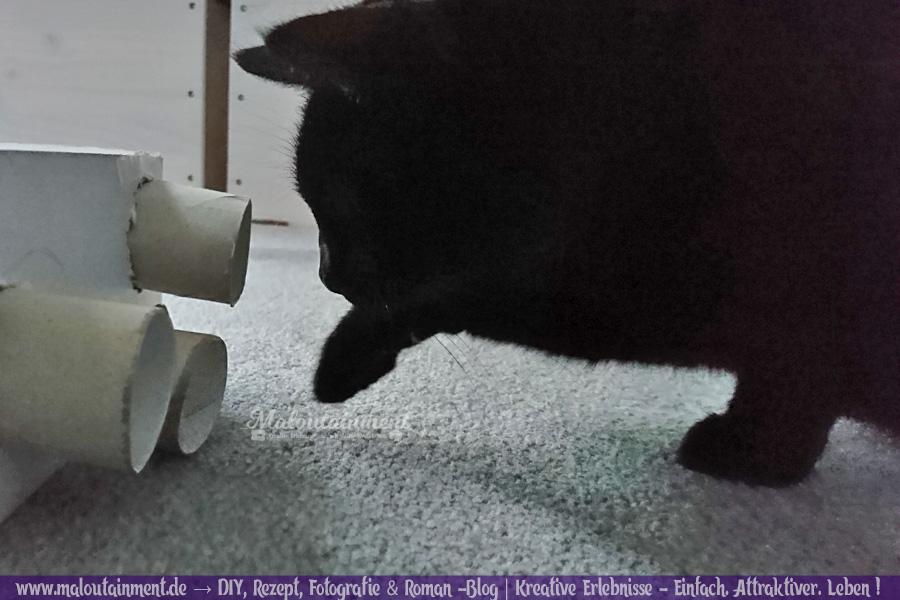 Maloutainment Blogger Essen Rezepte DIY Fotografie Romane Blog , Intelligenzsspielzeug basteln Spielzeug Anleitung selbermachen für Katzen Hunde Upcycling Pappe Leckerli Klorolle