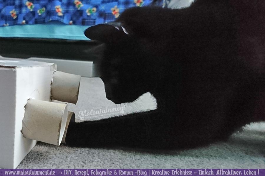 Maloutainment Blogger Essen Rezepte DIY Fotografie Romane Blog , Intelligenzsspielzeug basteln Spielzeug selbermachen für Katzen Hunde Upcycling Pappe Leckerli Anleitung Klorolle