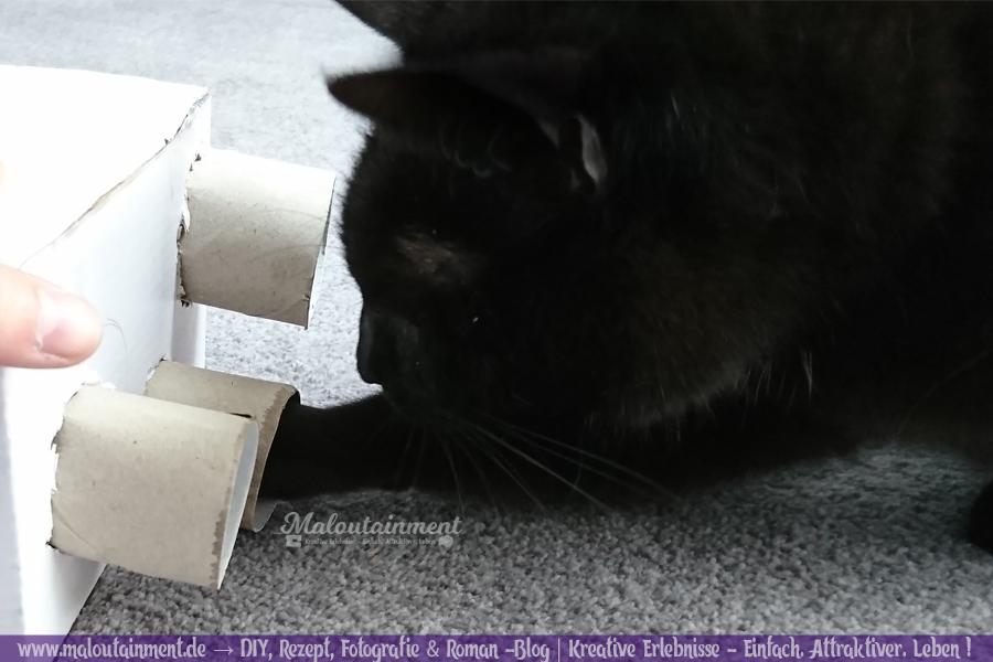 Maloutainment Blogger Essen Rezepte DIY Fotografie Romane Blog , Intelligenzsspielzeug basteln Spielzeug selbermachen für Katzen Hunde Upcycling Pappe Leckerli Klorolle