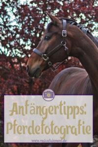 Anfaenger Tipps Pferde Bilder Trick Augehoehe-P Pony Potraet-Wertblicke Maloutainment Fotografie Pferd Hund Auto Motorrad Portraet DIY Rezepte