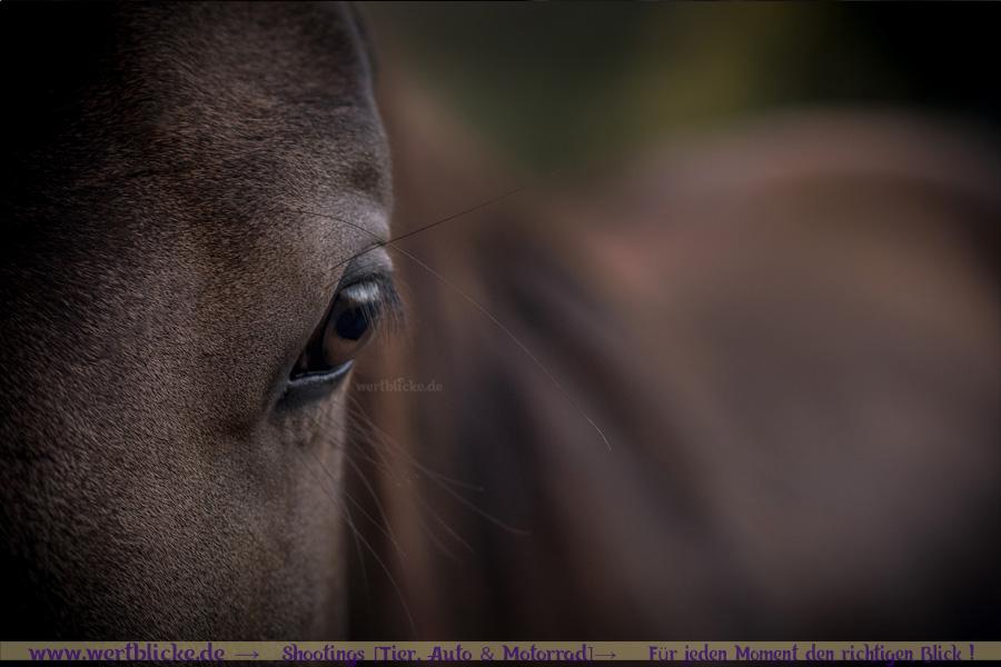 Anfaenger Tipps Pferde Bilder Trick Augehoehe-Pony Detail Auge-Wertblicke Maloutainment Fotografie Pferd Hund Auto Motorrad Portraet DIY Rezepte