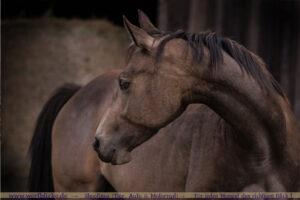 Anfaenger Tipps Pferde Bilder Trick Augehoehe-Pony Stute-Wertblicke Maloutainment Fotografie Pferd Hund Auto Motorrad Portraet DIY Rezepte