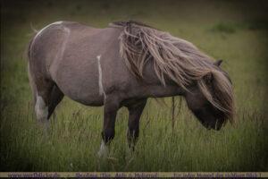 Anfaenger Tipps Pferde Bilder Trick Augehoehe-Wild Pony-Wertblicke Maloutainment Fotografie Pferd Hund Auto Motorrad Portraet DIY Rezepte