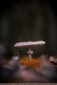 Herbst Bilder Pilze fotografieren Fotos Anfaenger Fortgeschrittene Tipps-Makro Detail-Maloutainment Wertblicke Fotografie DIY Rezepte Blog