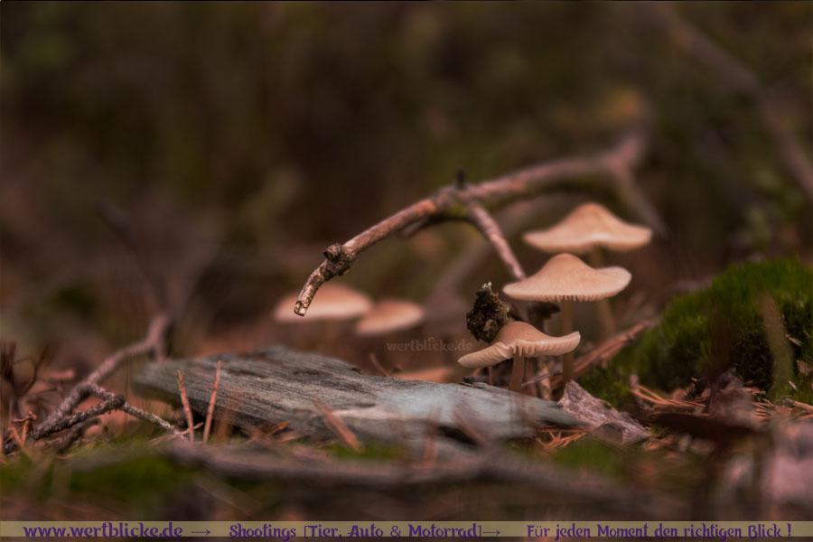 Herbst Bilder Pilze fotografieren Fotos Anfaenger Fortgeschrittene Tipps-Pilz Sammlung Wald-Maloutainment Wertblicke Fotografie DIY Rezepte Blog