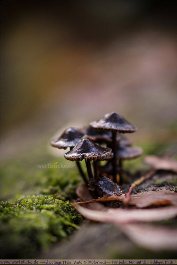 Herbst Bilder Pilze fotografieren Fotos Anfaenger Fortgeschrittene Tipps-Pilze im Wald-Maloutainment Wertblicke Fotografie DIY Rezepte Blog