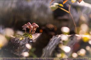 Herbst Bilder Pilze fotografieren Fotos Anfaenger Fortgeschrittene Tipps-Wassertropfen makro-Maloutainment Wertblicke Fotografie DIY Rezepte Blog