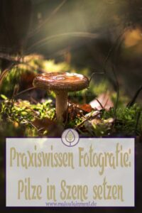 P Herbst Pilze Bilder fotografieren Fotos Anfaenger Fortgeschrittene Tipps-Makro Detail-Maloutainment Wertblicke Fotografie DIY Rezepte Blog