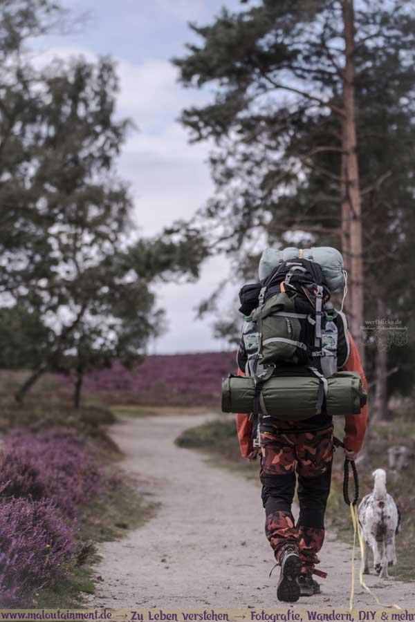 Mann wandert mit Hund durch Heide