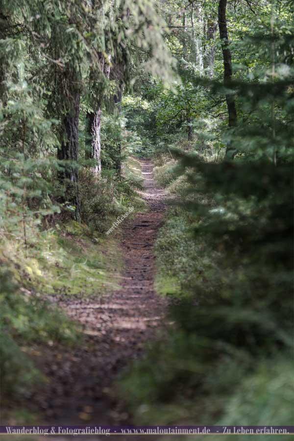 Waldweg auf dem Heidschnuckenweg