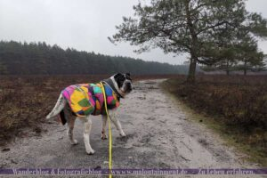 Hund beim Wandern auf dem Heidschnuckenweg