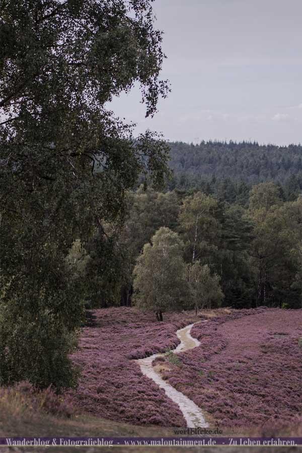 Wanderweg durch die Lüneburger Heide
