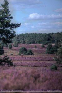 Landschaftsbild der Lüneburger Heide
