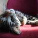 4 wertvolle Tipps für schöne Tierfotos - mit dem Handy!