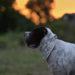 Halstuch DIY Do it youself Shar Pei Hund Hunde Blog Selbermachen Nähen Katzen kreativ Fotografie Tier