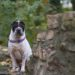Kingston Mauern Schloss Maloutainment Fotografie Handy Kamera Tier Hund Hunde Blog Shar Pei Porträt Tipps bessere Fotos Verbesserung Qualität Shooting