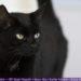 Tipps für Anfänger: Katzenfotografie