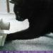 Maloutainment Blogger Essen Rezepte DIY Fotografie Romane Blog , Intelligenzsspielzeug basteln Spielzeug selbermachen Anleitung für Katzen Hunde Upcycling Pappe Leckerli Klorolle